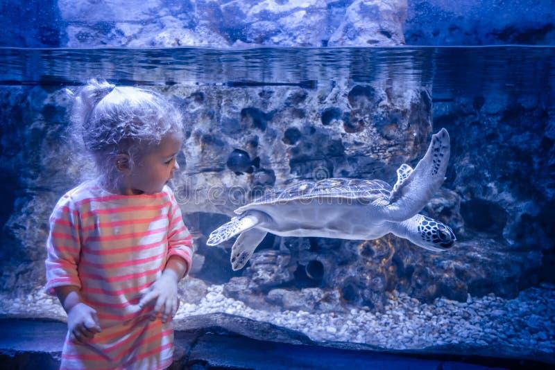 Ciekawa dziecko dziewczyna patrzeje morskiego podwodnego dennego żółwia akwarium w głębokiej błękitnej koloru pojęcia dzieci ciek obrazy stock