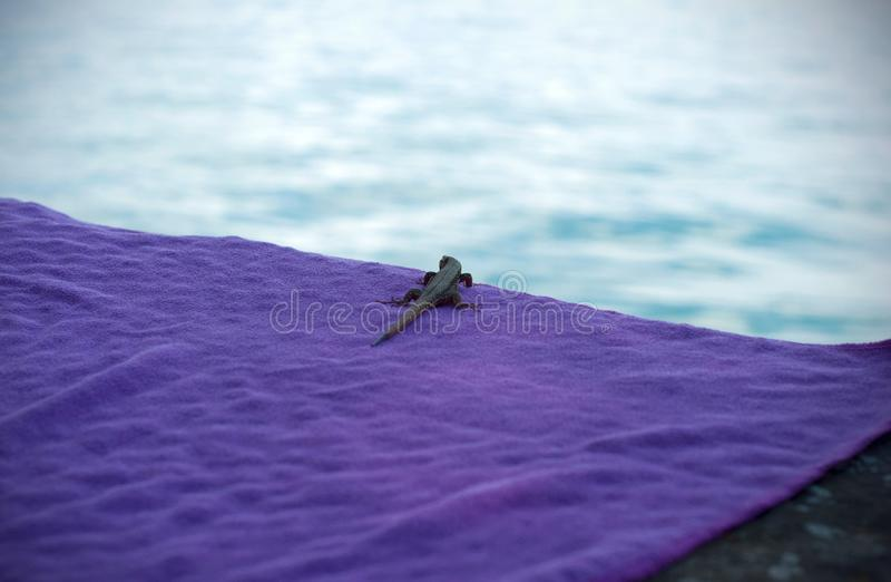 Ciekawa jaszczurka na wodny boczny patrzeć zdjęcia royalty free