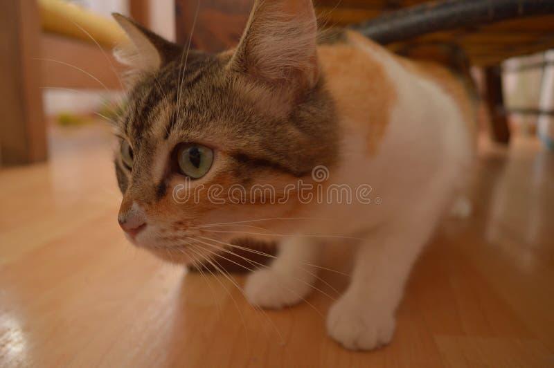 ciekawa kitty zdjęcie royalty free