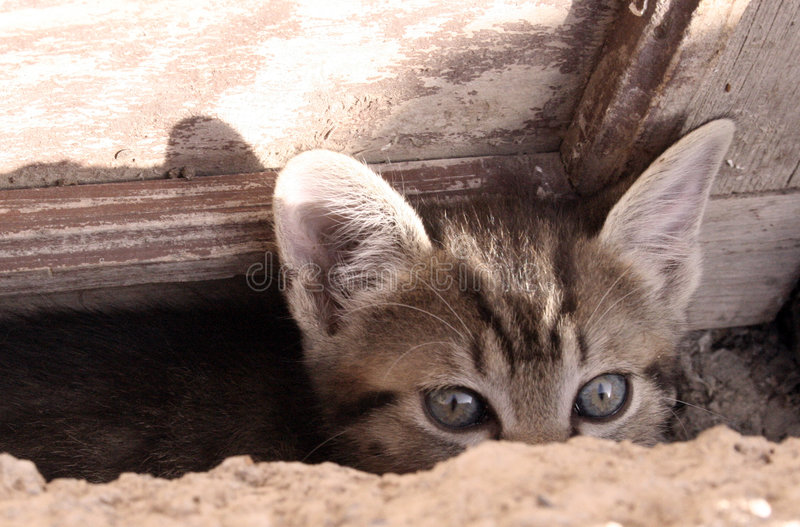 ciekawa kotku zdjęcia royalty free