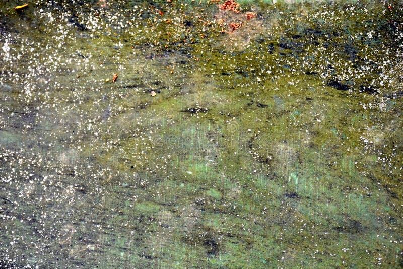 Ciekawa szorstka drewniana zielona tekstura zdjęcia stock