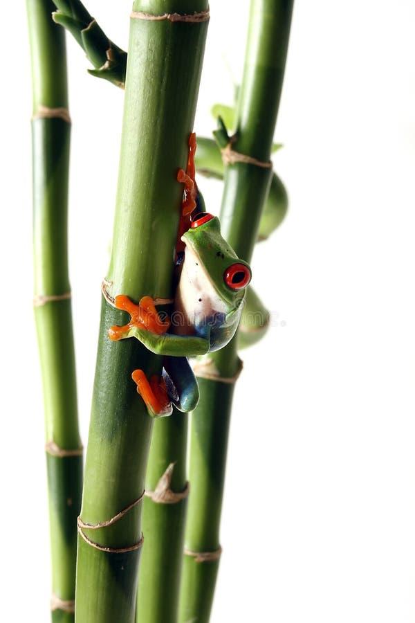 ciekawy żaby drzewo obrazy royalty free