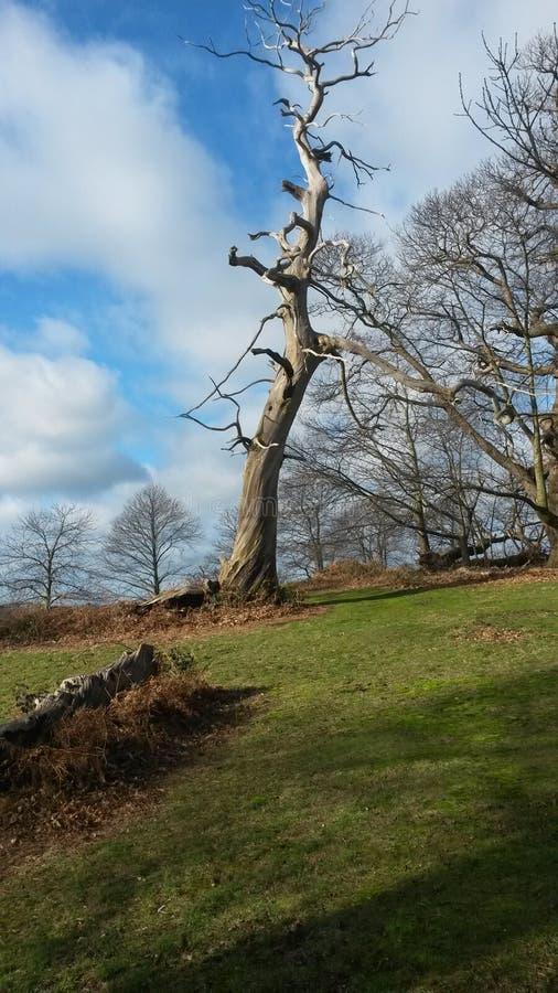 Ciekawy drzewo zdjęcie stock