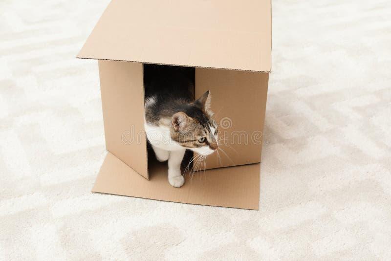 Ciekawy kot dostaje z pudełka obraz stock