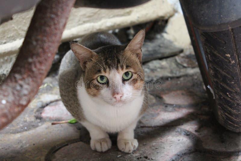 ciekawy kota obraz royalty free