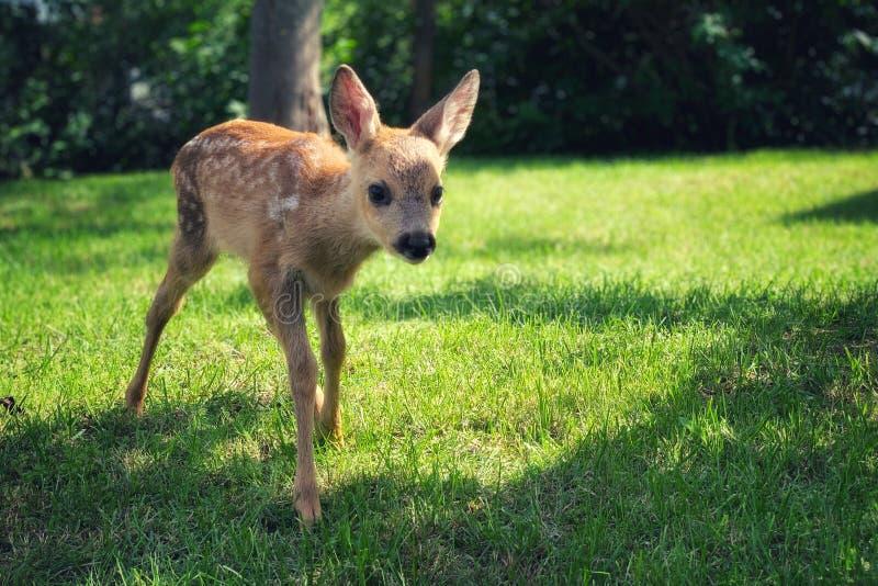 Ciekawy mały kochany przy łąką zdjęcie royalty free