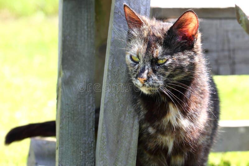 Ciekawy Pstrobarwny kot obrazy stock