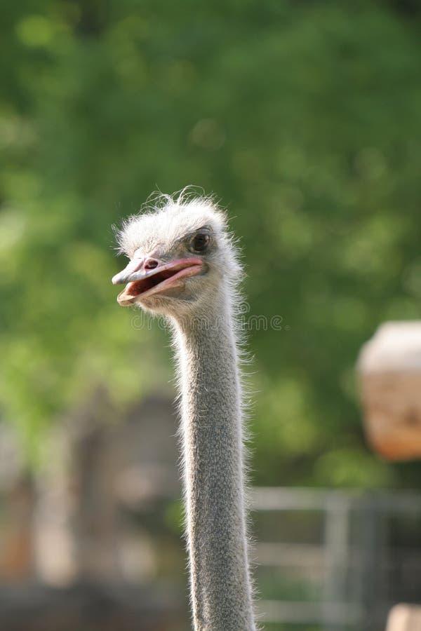 ciekawy ptak zdjęcia royalty free