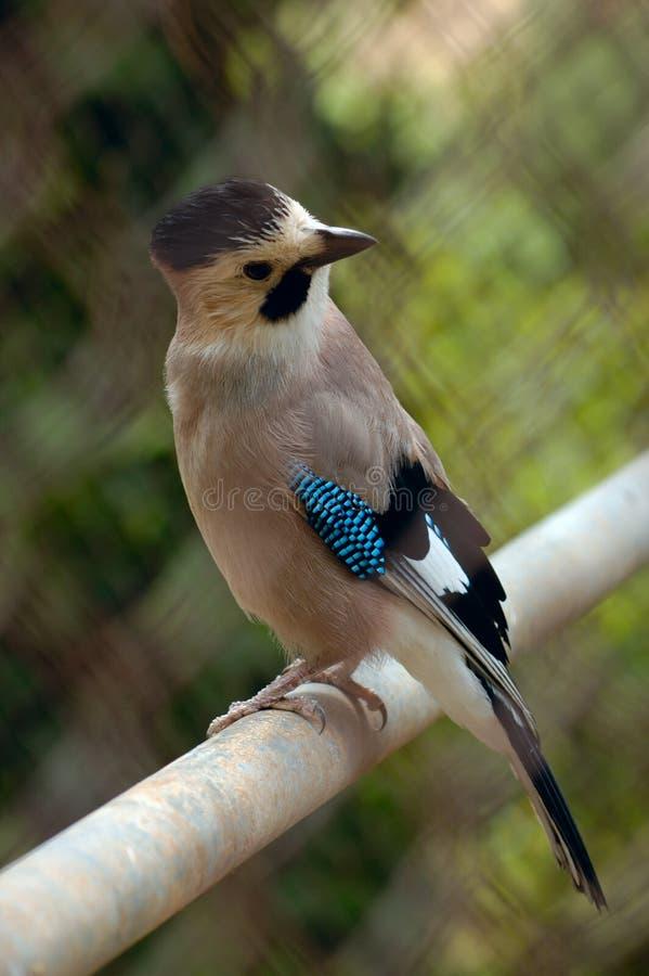 ciekawy ptak obraz stock