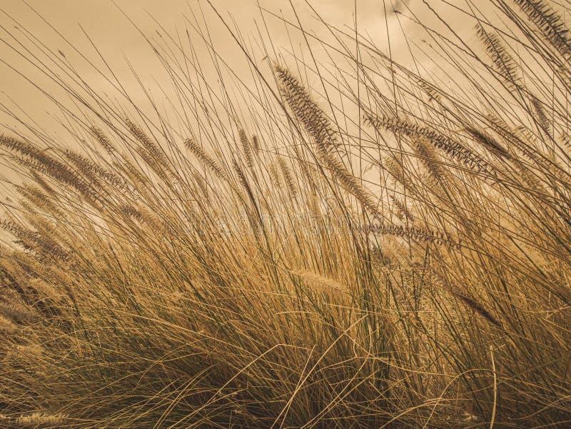 Ciekawy zbliżenie zbożowa łąka przy poboczem fotografia royalty free