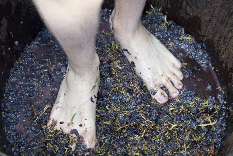 Cieki chodzić tupiąc winogron zdjęcie stock