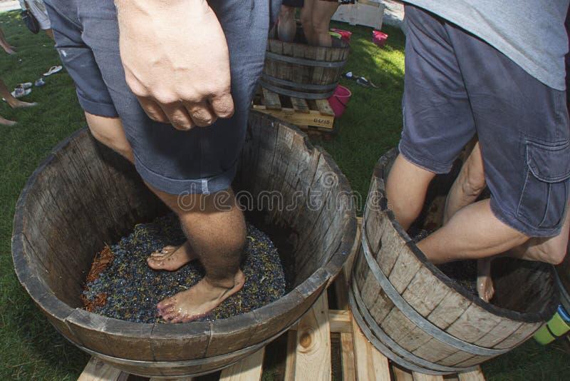 Cieki chodzić tupiąc winogron zdjęcia royalty free