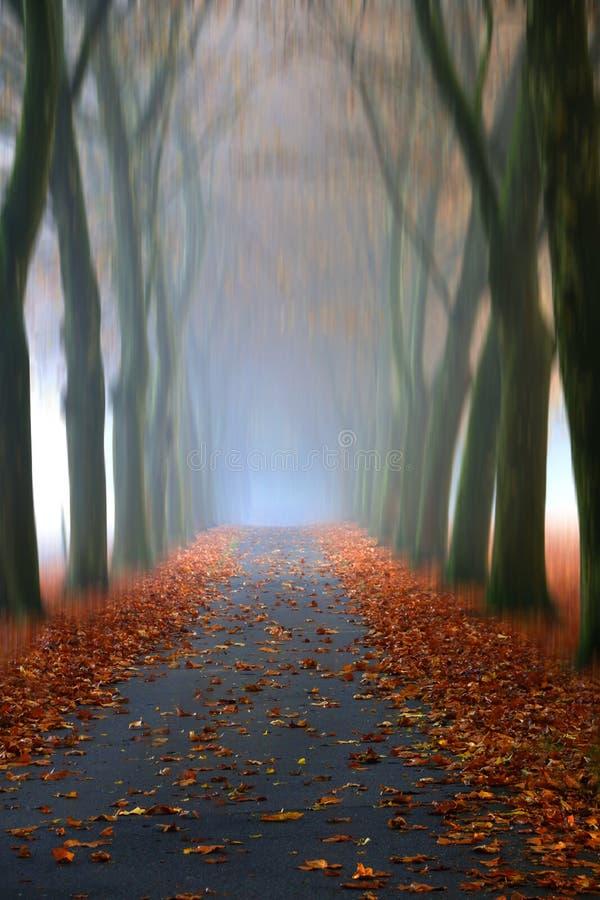 cieki serc miłości ścieżki kształtowali obraz royalty free
