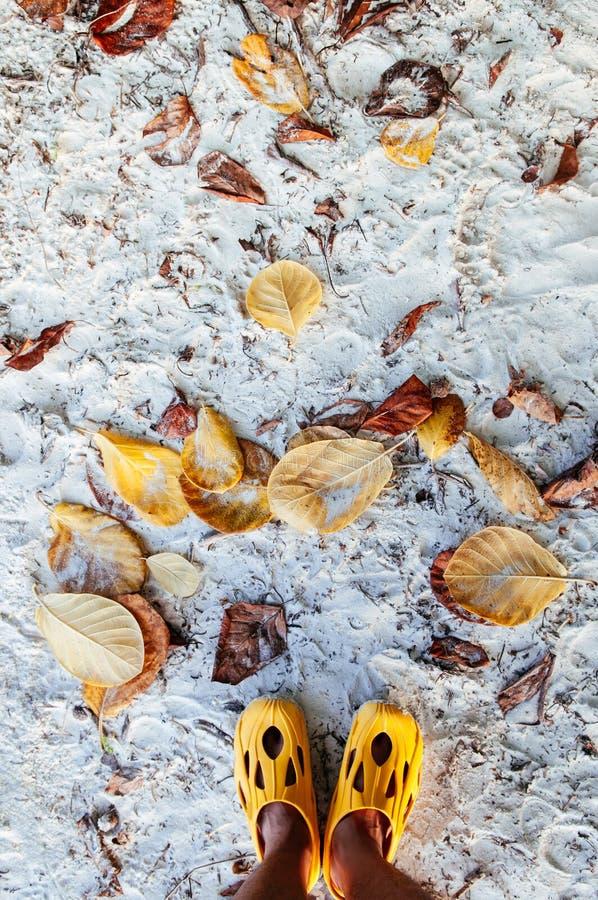 Cieki strzału z żółtymi sandałami i kolorów żółtych suchymi liśćmi na białym San fotografia stock