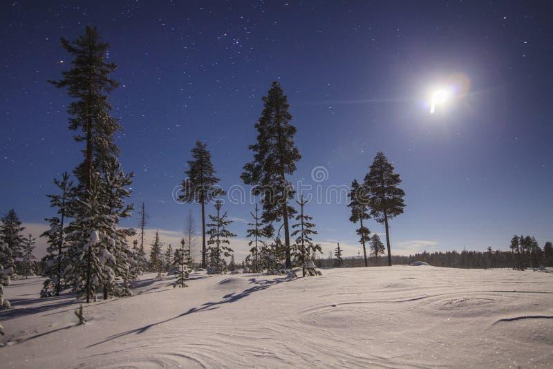 Ciel étoilé au-dessus des arbres couverts de neige photographie stock libre de droits