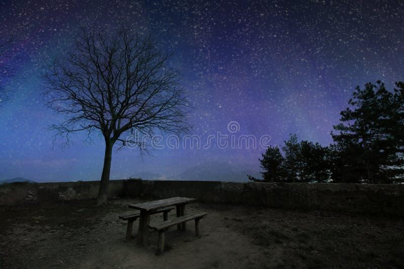 Ciel étoilé bleu-foncé avec les silhouettes noires d'arbre image stock