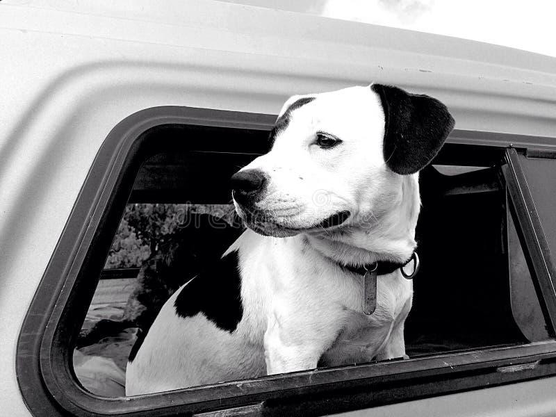 ciel собака стоковое фото rf