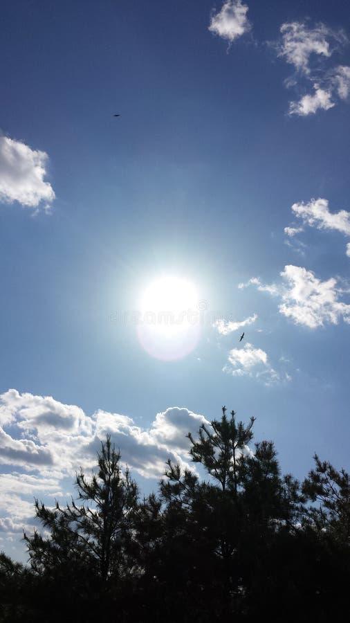 Ciel au-dessus des arbres photos stock