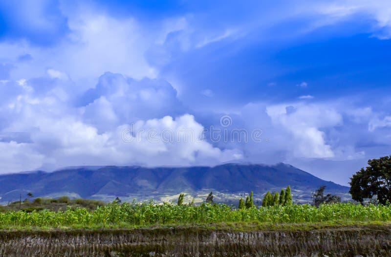 Ciel avec des nuages au-dessus de plantation de maïs images libres de droits