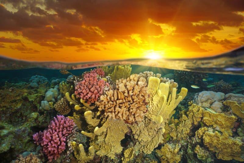 Ciel avec la lumière de coucher du soleil et le récif coralien sous l'eau photo stock