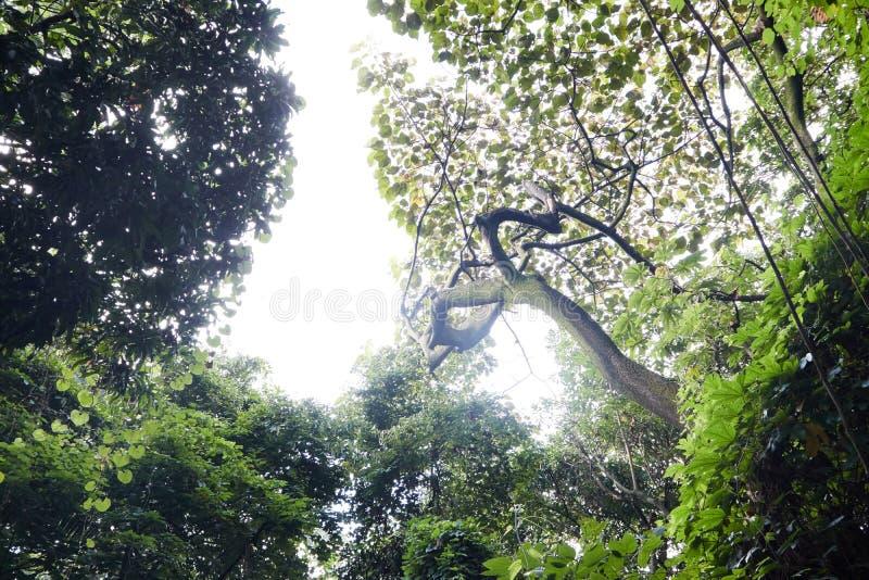 Ciel blanc dans une forêt photographie stock
