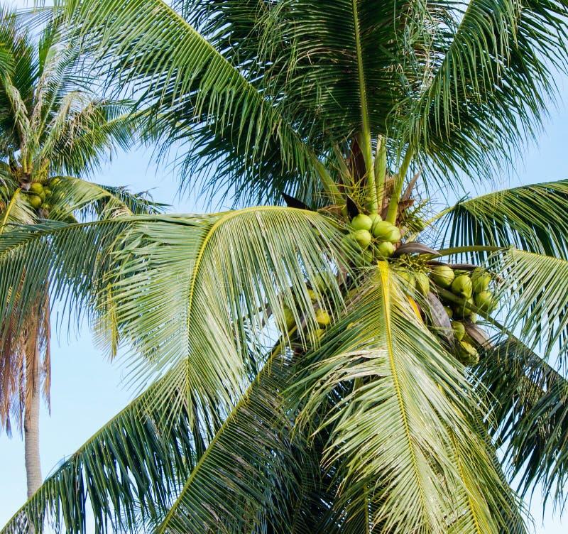 Ciel bleu arbres exotiques Vacances en Asie photos libres de droits