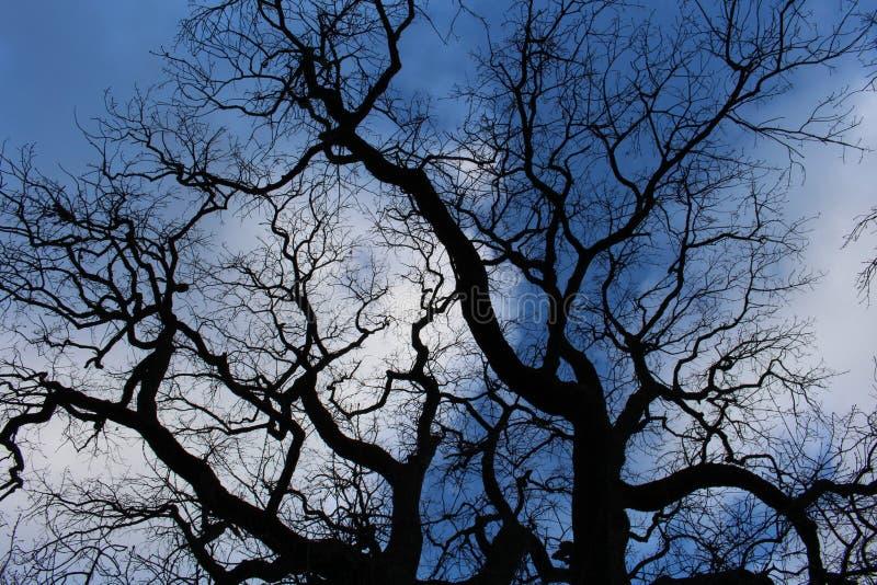 Ciel bleu avec des arbres de Mosiac images libres de droits
