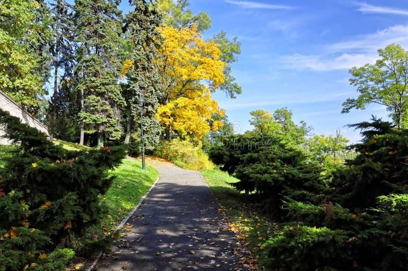 Ciel bleu comme contexte pour des arbres de couleur jaune et verte image libre de droits