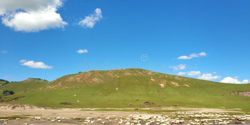 Ciel bleu d'herbe de Sun assez photo stock