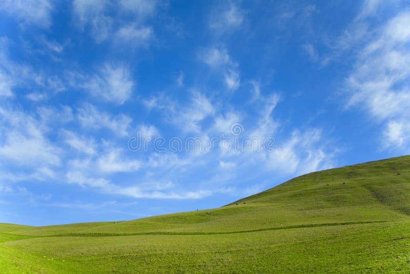 Ciel bleu d'herbe verte photos stock
