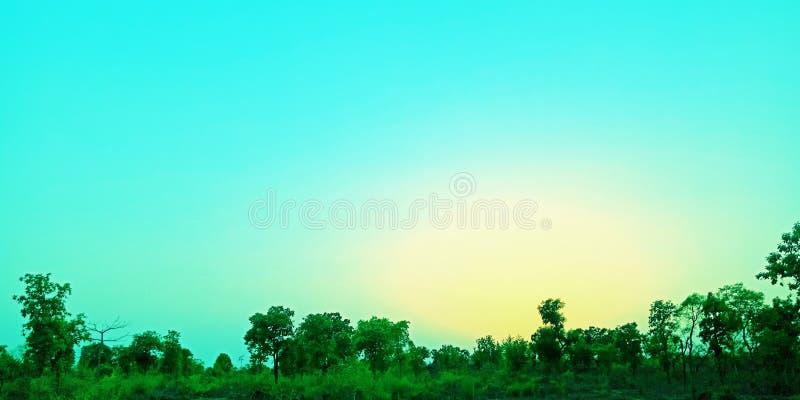 Ciel bleu dans la forêt en égalisant la photo courante de temps image stock