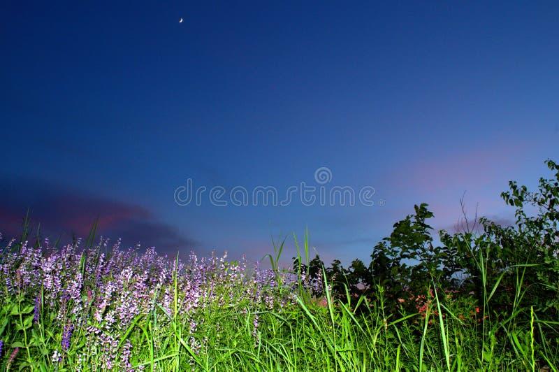Ciel bleu de beau pré de soirée photo stock