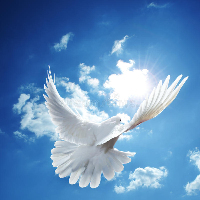 Ciel bleu de colombe de blanc