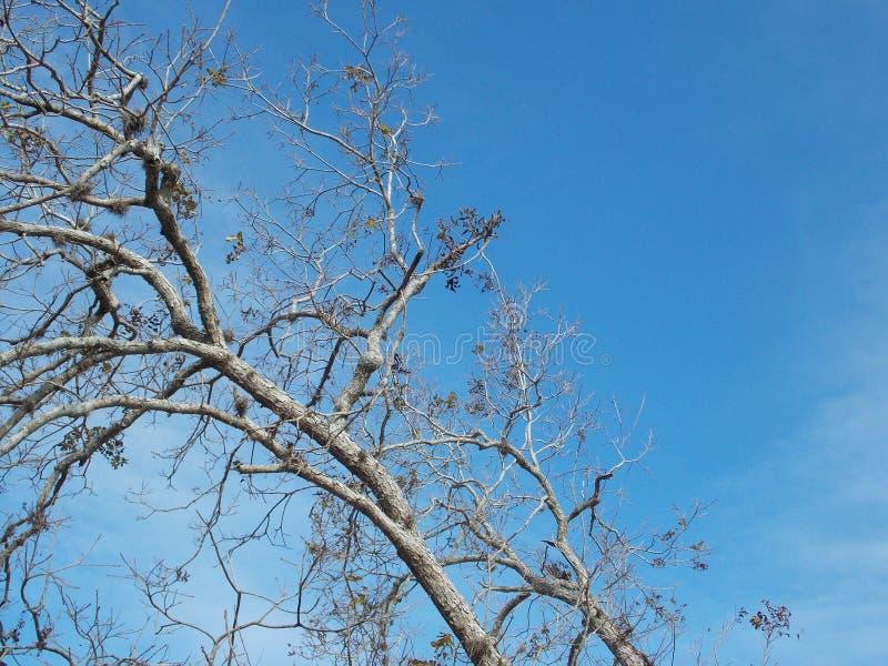Ciel bleu de Copyspace avec l'arbre dénudé photographie stock libre de droits