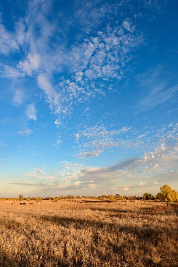 Ciel bleu de coucher du soleil avec des nuages sensibles et pelucheux et un champ d'or photo stock