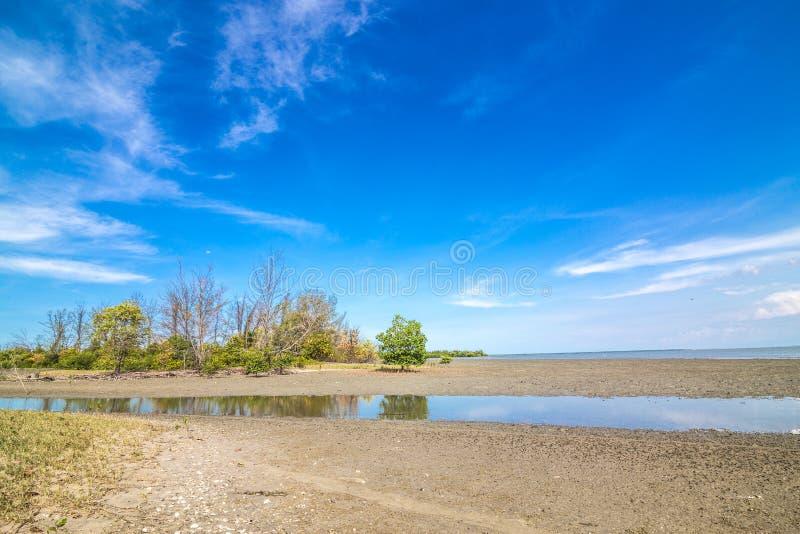 Ciel bleu de forêt tropicale tropicale de forêt de palétuvier photo libre de droits