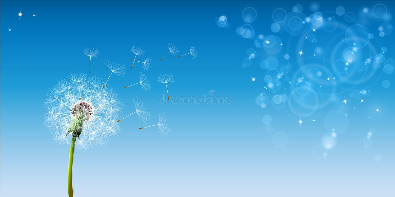 Ciel bleu de pissenlit illustration stock