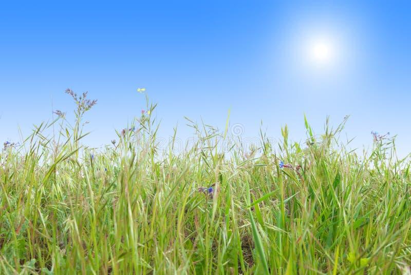 ciel bleu de vert d'herbe ensoleillé photographie stock libre de droits
