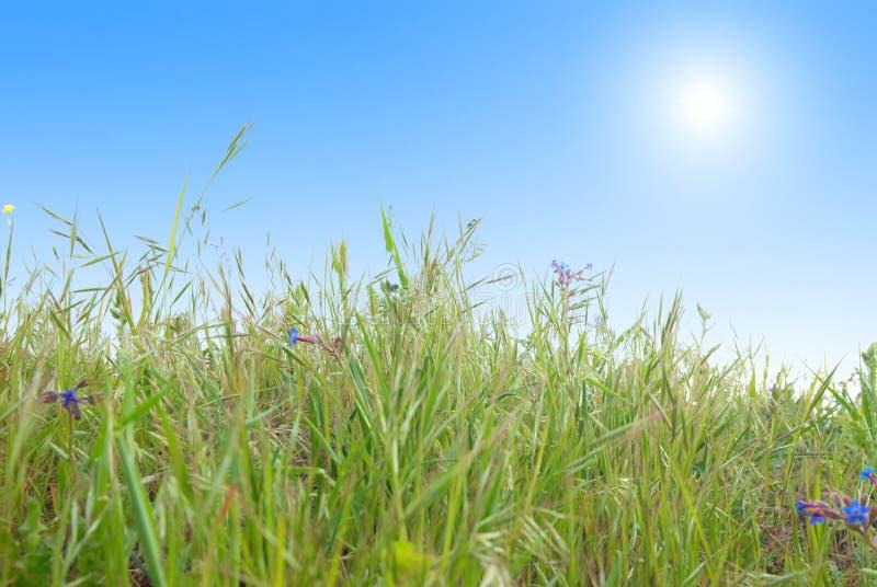ciel bleu de vert d'herbe ensoleillé photos libres de droits