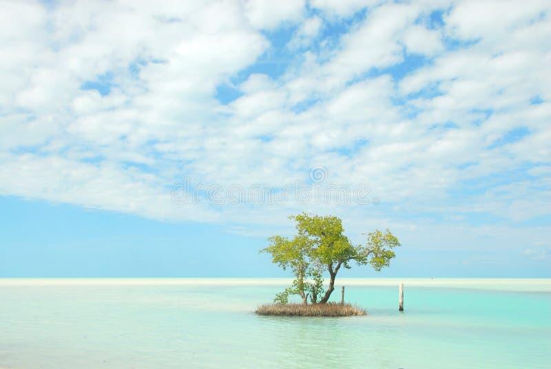 Ciel bleu des Caraïbes d'île de Holbox photo stock