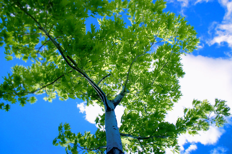 Ciel bleu et arbre images stock