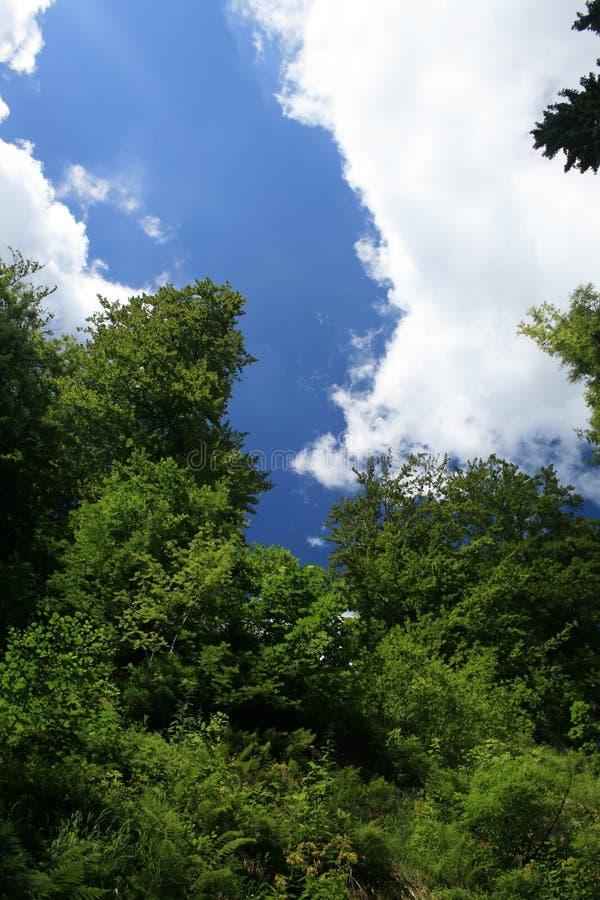 Ciel bleu et arbres images libres de droits