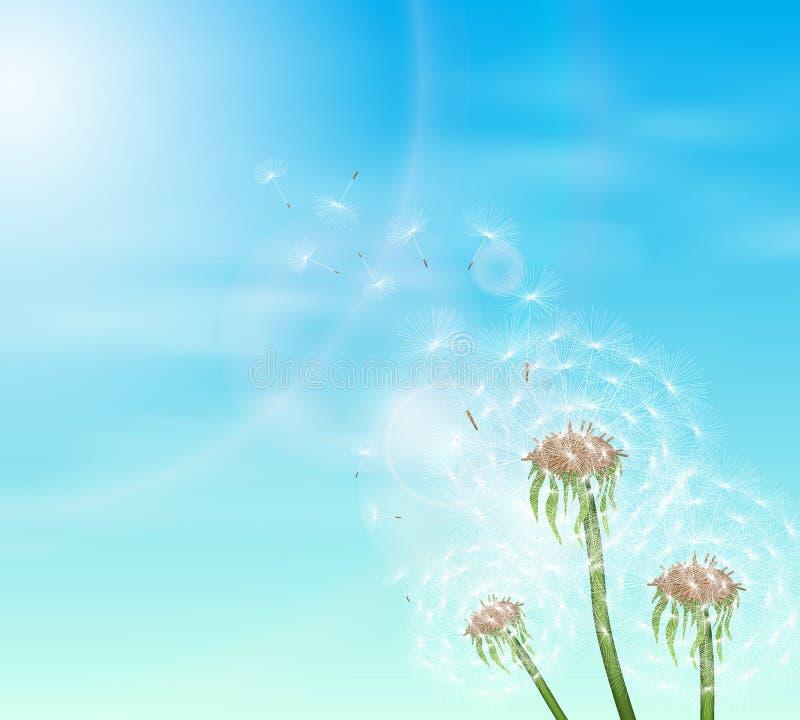 Ciel bleu et pissenlit trois photo stock