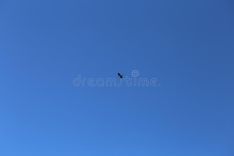 Ciel bleu et un vol d'oiseau photos stock