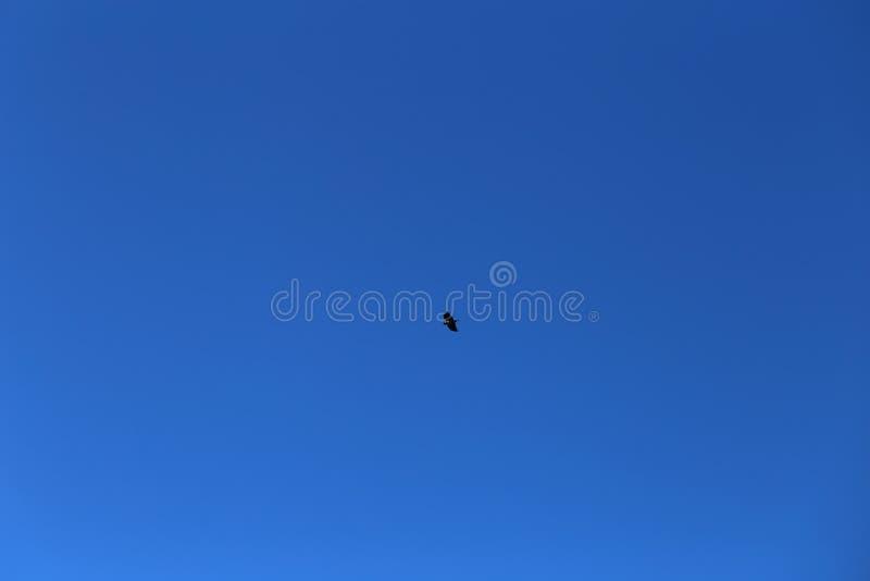 Ciel bleu et un vol d'oiseau photos libres de droits