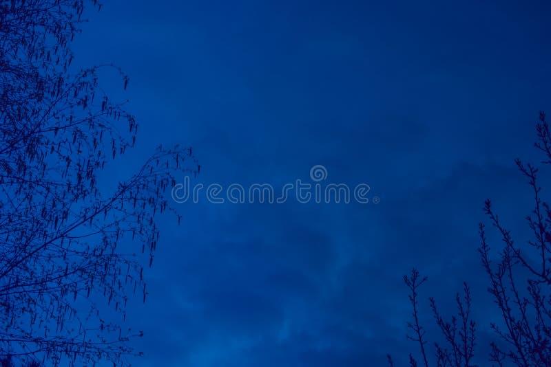 Ciel bleu-foncé avec des branches d'arbre des deux côtés photo stock