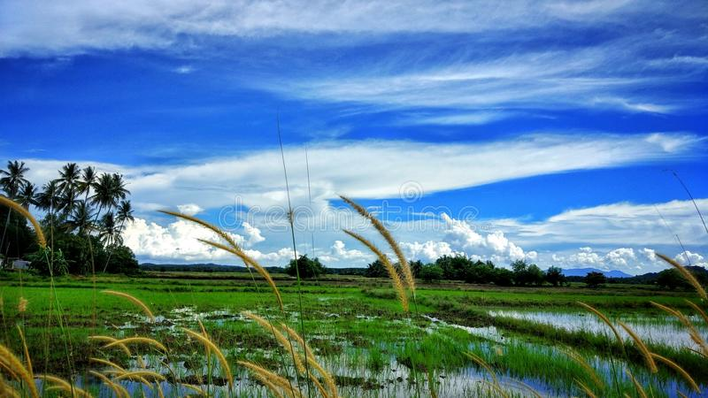 Ciel bleu, herbe verte images stock