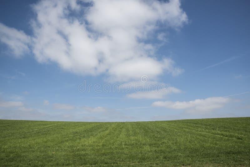 Ciel bleu, herbe verte, nuages blancs images stock