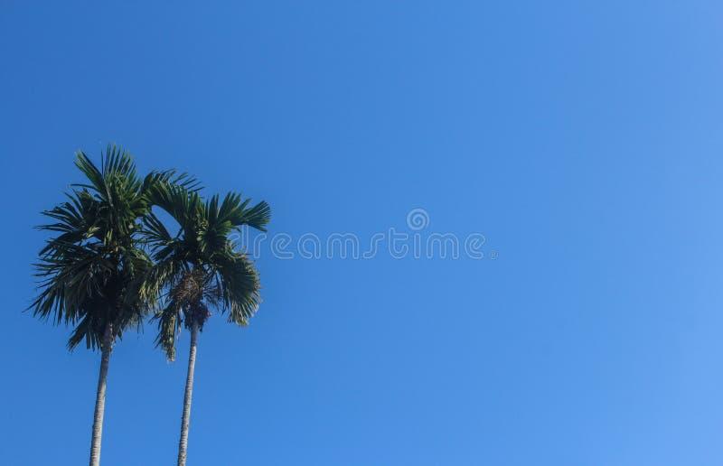 Ciel clair bleu avec l'arbre de noix de coco photographie stock