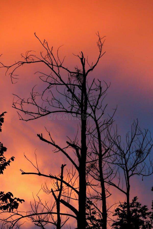Ciel coloré et arbre sec photos stock